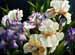 botanical____0968