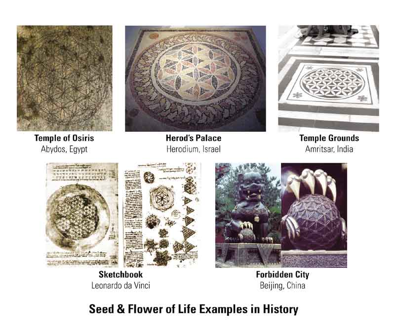 Seed_and_Flower_Examples