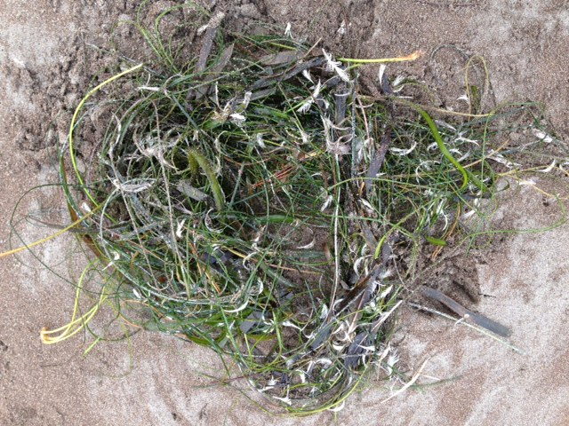 3) SEGAL Seaweed (1)