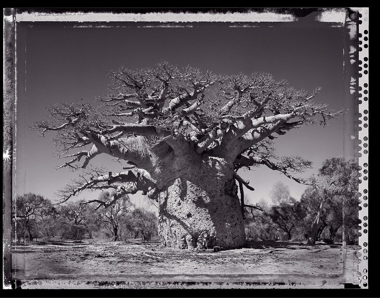 02 Baobob #24 - 2010, Madagascar