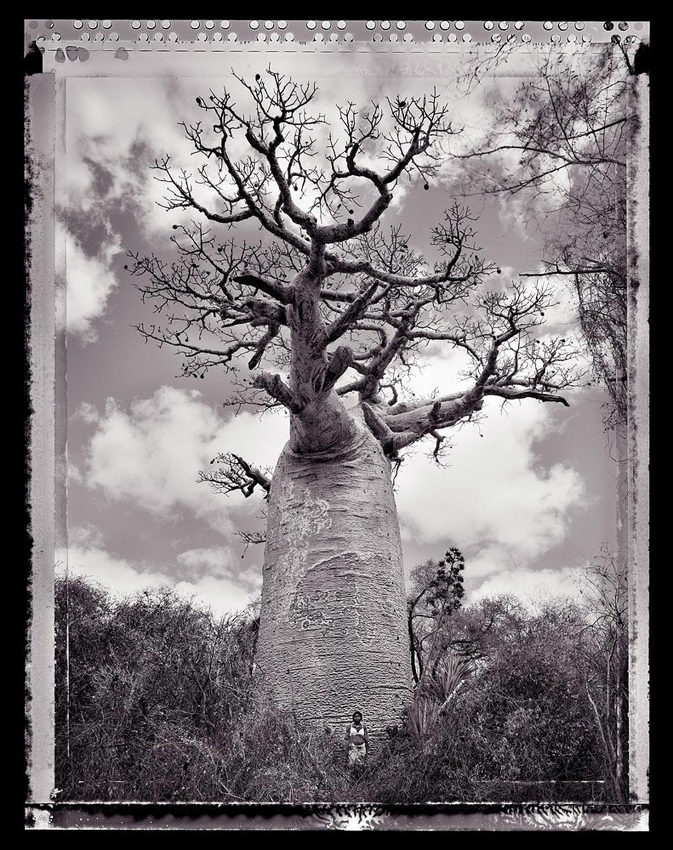 03 Baobob #30 - 2010, Madagascar