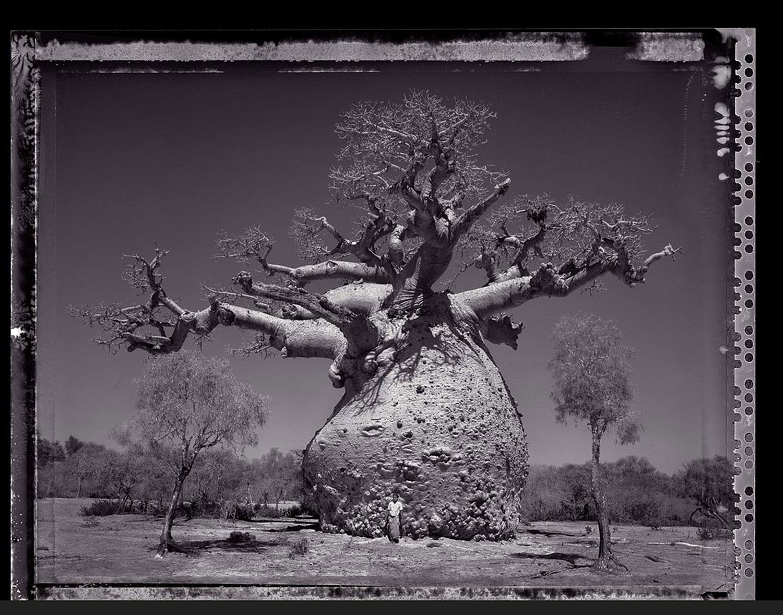 05 Baobob #29 - 2010, Madagascar