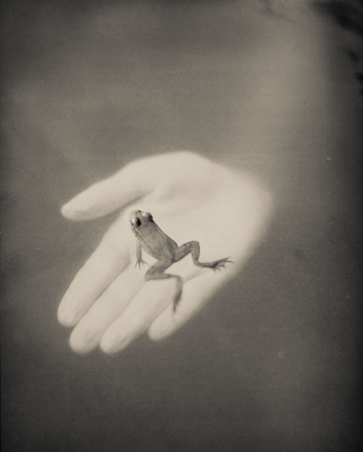03 A Frog in Hand