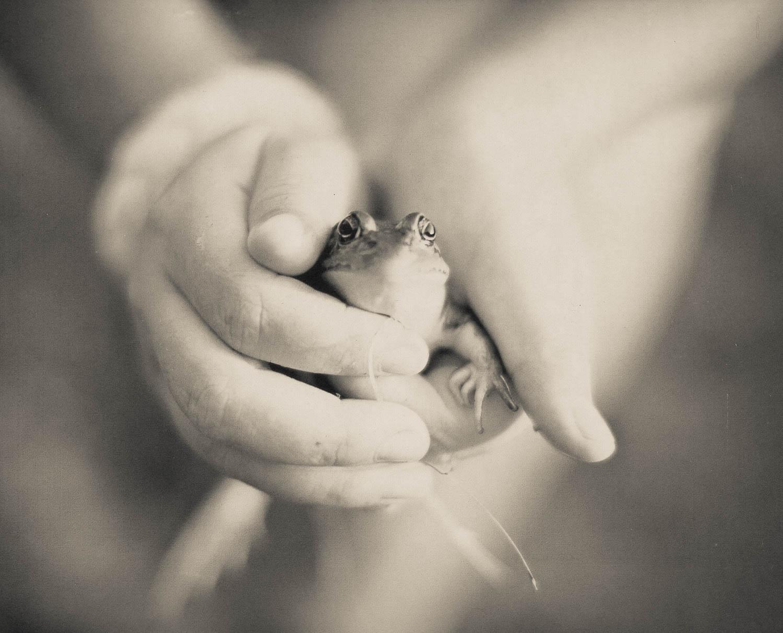05 Clovers Frog