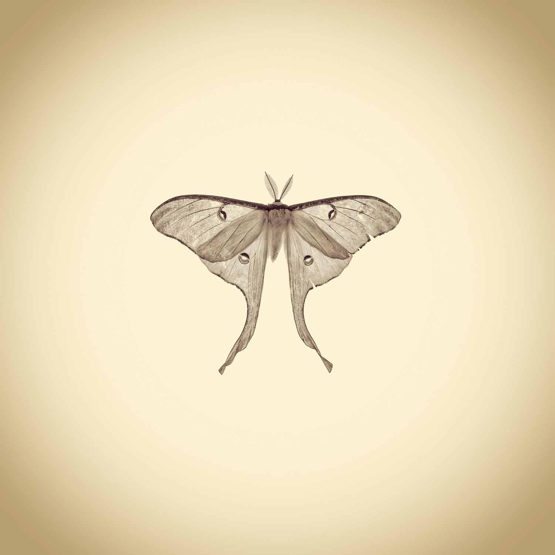 02-Luna-Moth,-Actias-Luna