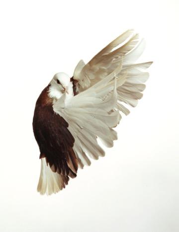 5 RoeEthridge-Pigeon-2001