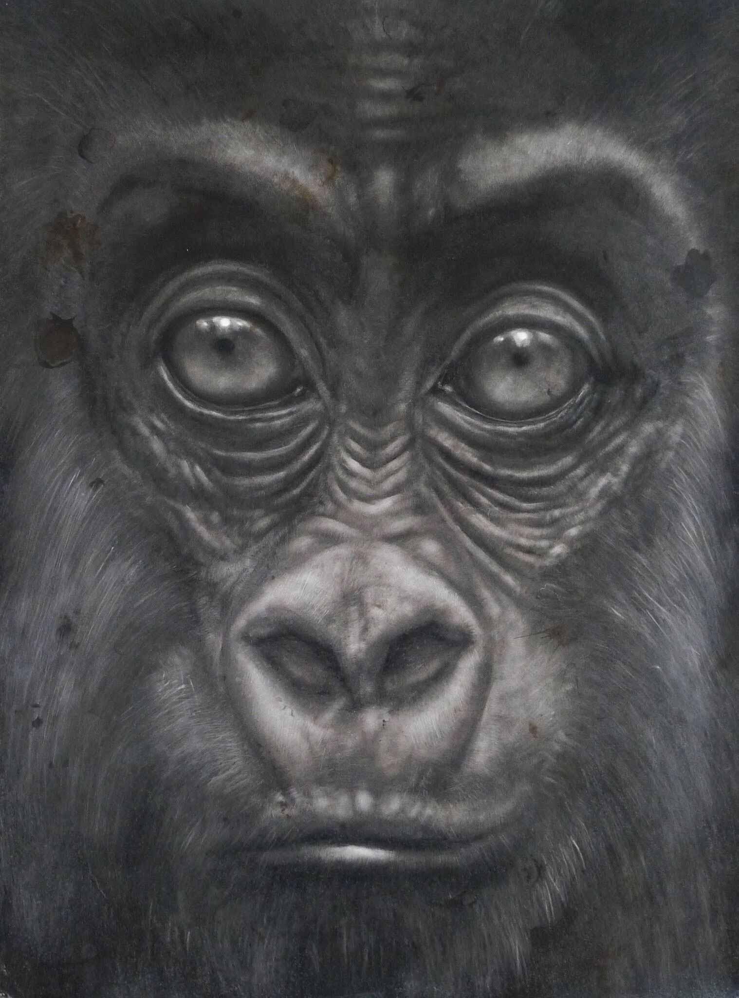 3-Drawn-JuanPerdiguero-SimiosRostros-2016