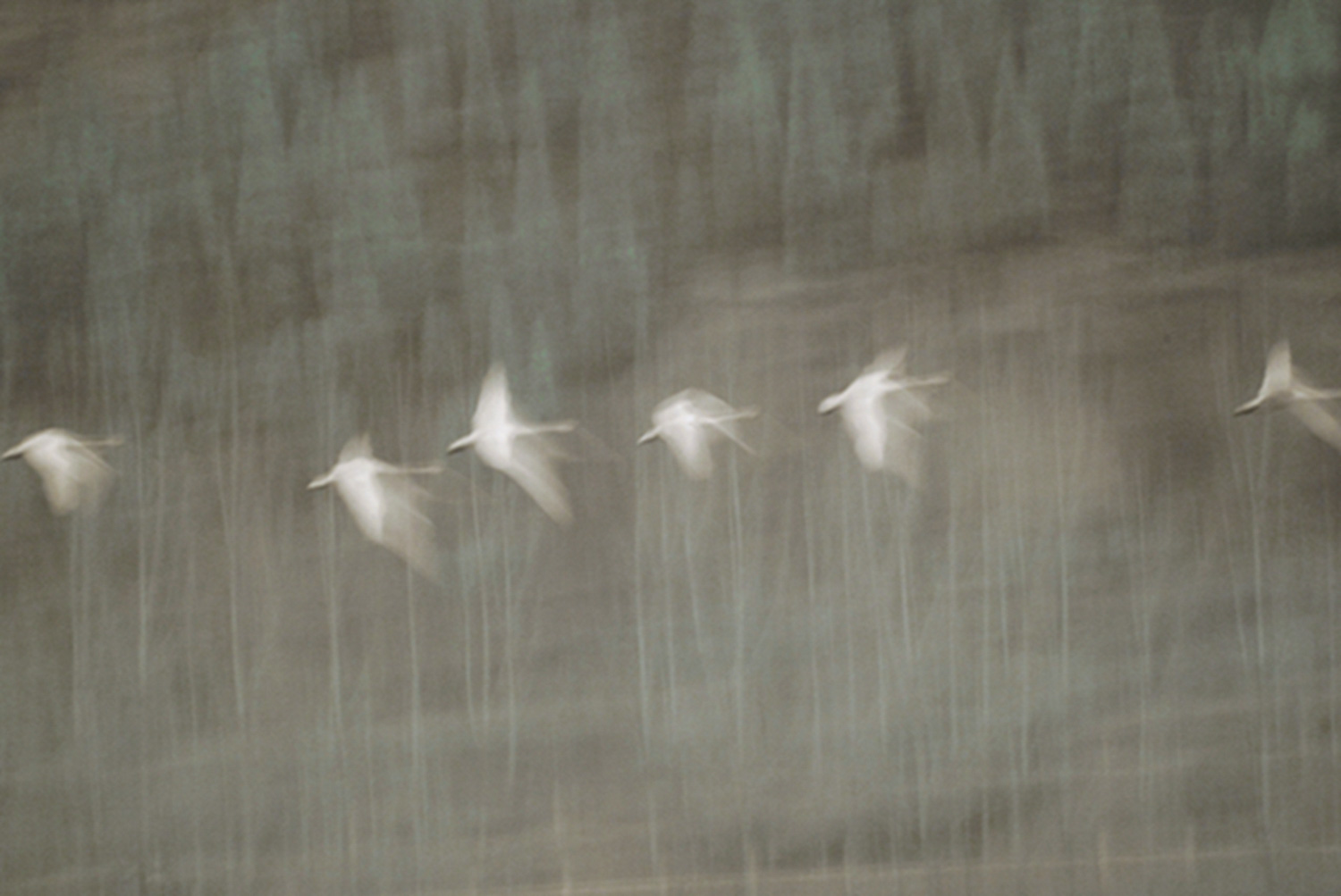 5 From series Swan