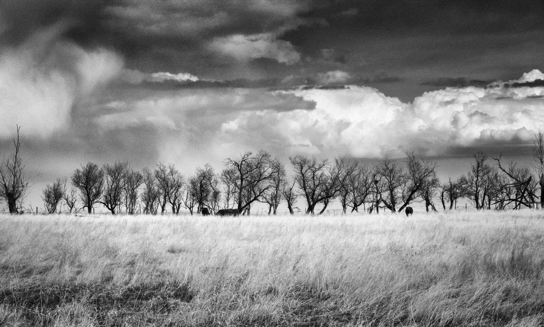 1 Hanna-Treeline