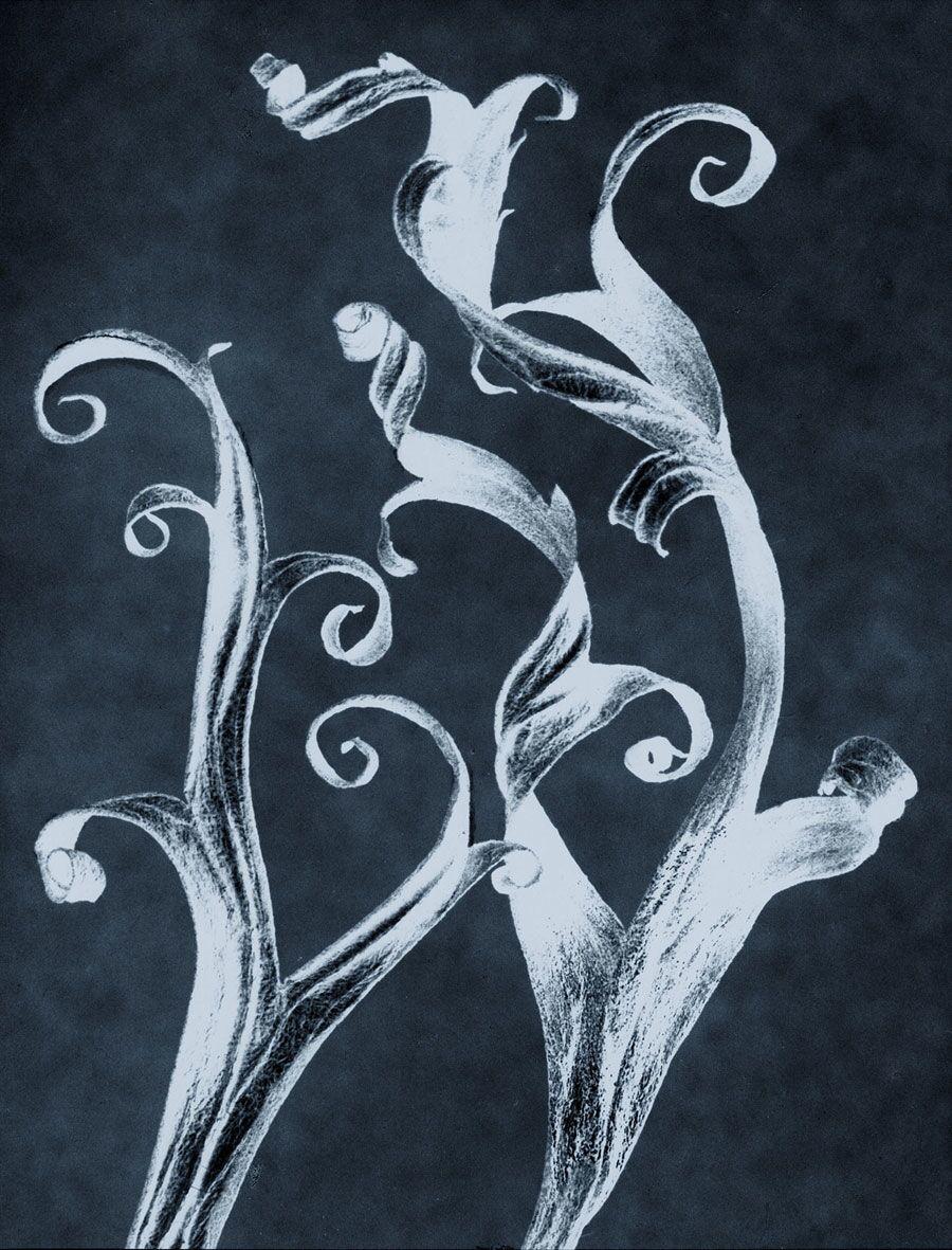8 Blossfeldt-Ruff-neg_stil_06