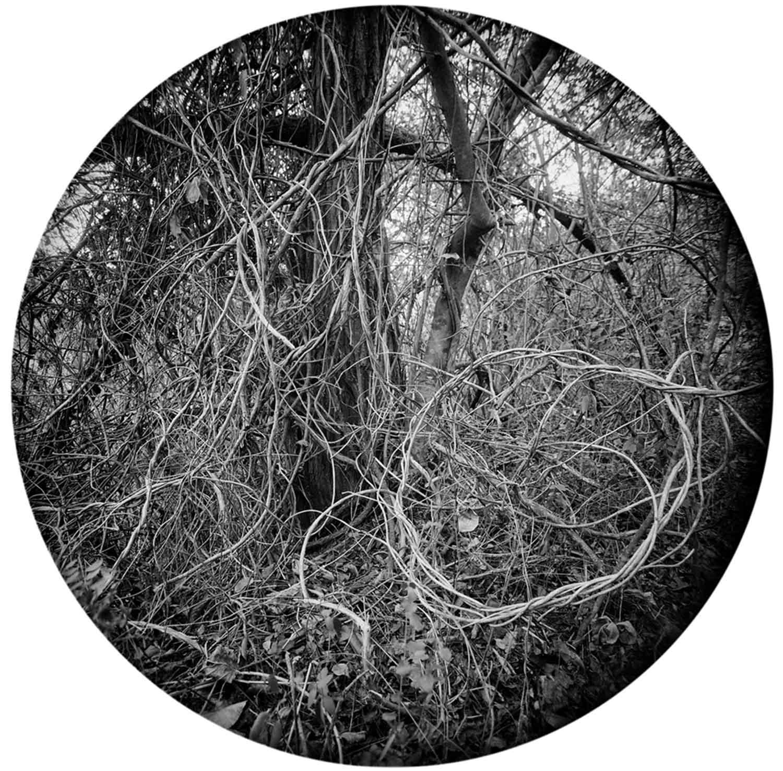 5 Enveloping Landscape #10 Susan Patrice