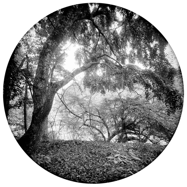 7 Enveloping Landscape #3 Susan Patrice