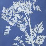 Another Online Visit: A Blue Thought in a Blue Shade: Anna Atkins and Cyanotype Photograms