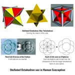 Geometrically Ordered Design: The Everlasting Fruit
